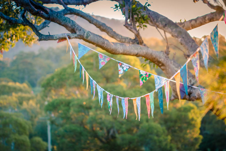 Low angle view of colorful bunting hanging on tree during sunset