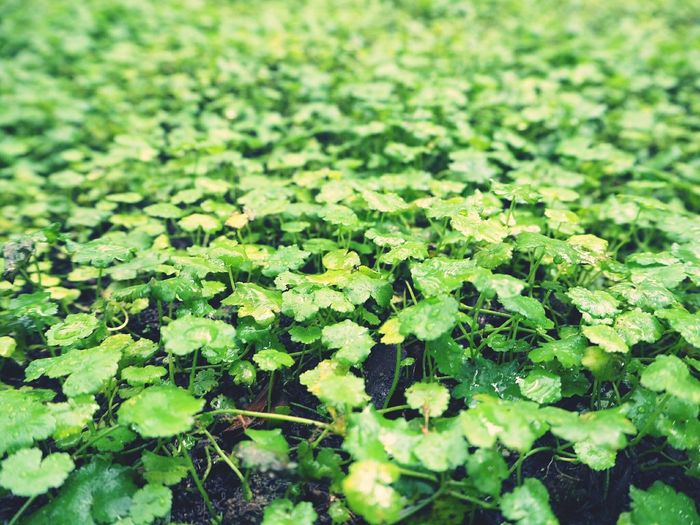 Green Grass Leaf Plant Beauty In Nature Freshness Green Color No People Outdoors Close-up Greenery