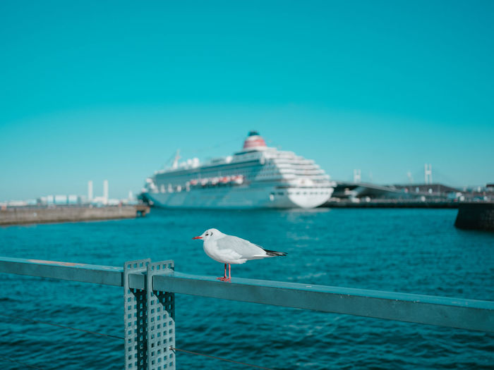 Water Animal Themes Bird One Animal Animals In The Wild Animal Wildlife Vertebrate Animal Sea Sky Seagull Nautical Vessel Architecture No People Blue Built Structure Transportation Perching Nature Sea Bird Outdoors Cruise Ship