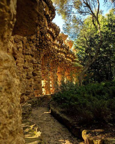 Shotonpixel2xl Parkguell Park Gaudi Architecture Gaudì Architecture Work Tree Sky Close-up Growing Garden Garden Botanical