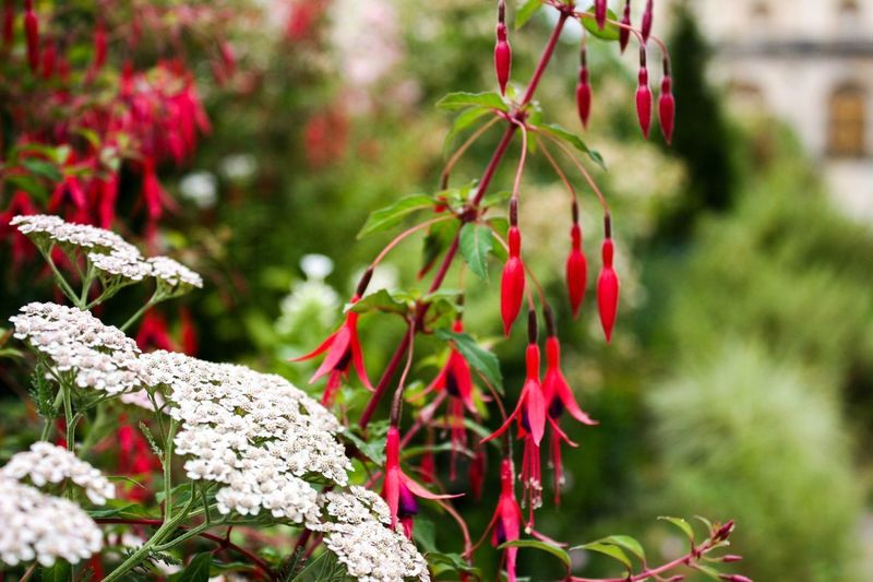 EyeEmNewHere Plant Growth Red Focus On Foreground Nature Close-up Beauty In Nature Flower Flowering Plant Freshness No People Fragility