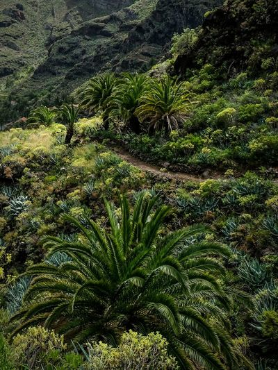 La Gomera The Great Outdoors - 2015 EyeEm Awards Landscape South Palm Trees Trekking Naturelovers Fujifilm X-E2
