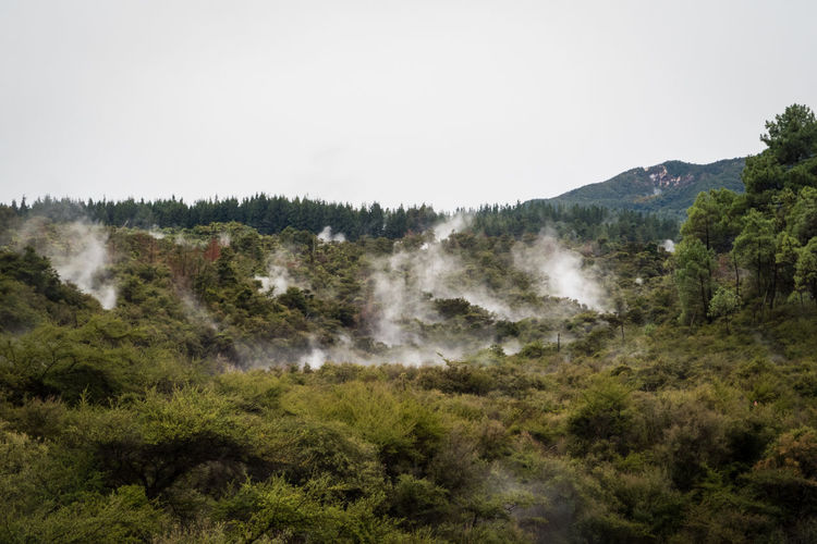 forrest with hot springs near rotorua new zealand Rotorua  Smoke Beauty In Nature Clear Sky Day Environment Geothermal Activity Growth Land Landscape Mountain Nature New Zealand No People Non-urban Scene Outdoors Plant Power In Nature Scenics - Nature Sky Tranquil Scene Tranquility Tree Wai-o-tapu Water The Great Outdoors - 2018 EyeEm Awards