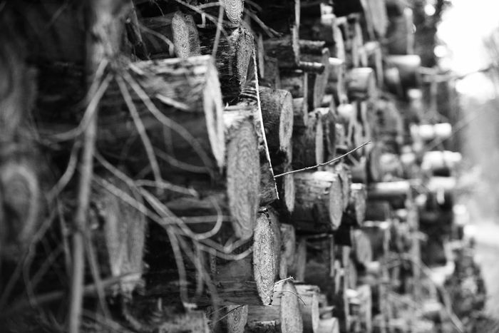 Abundance Arrangement Blackandwhite Photography Close-up Container Cotswolds Day Focus On Foreground Group Of Objects Heap In A Row Large Group Of Objects Logs No People Outdoors Selective Focus Still Life Wood - Material WoodLand Work Tool