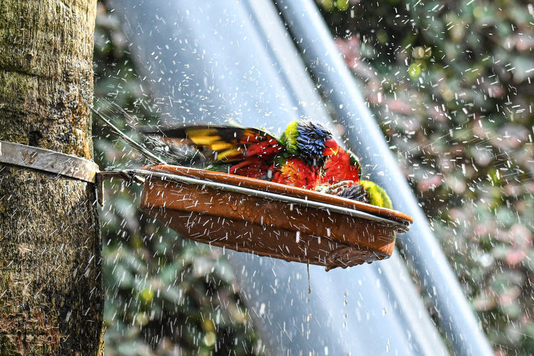 Close-up of parrots playing with water