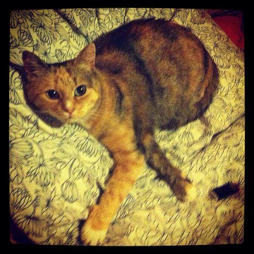 My Cat ❤️
