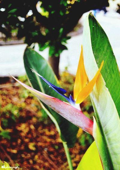 bird-of-paradise flower on Malta Flowers Nature Photography Photography Blogger AkPhotography Theseandthisphotography