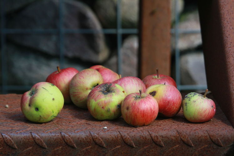 Autumn Apple - Fruit Close-up Day Food Food And Drink Freshness Fruit Harvest Healthy Eating Nature No People Outdoors Red Still Life