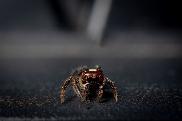 Close-up of spider on table