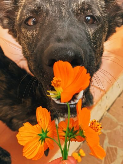 Flower Flowering Plant Mammal One Animal Close-up Plant Animal Animal Themes Dog Domestic Canine Domestic Animals Pets Nature Freshness Vertebrate Flower Head Fragility Portrait Beauty In Nature