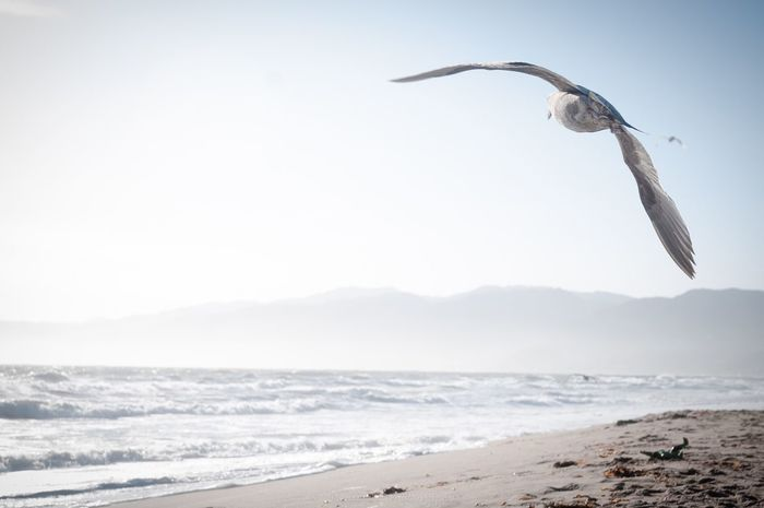 Another Flying Seagull on Santa Monica Beach Seagull Seagulls SEAGULL IN FLIGHT Seagulls And Sea Backgrounds Flying Bird Flying Taking Off Nature e Nature Photography Beautiful Nature Freedom Serenity