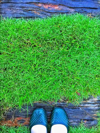 Grass Green Fresh Shoes Wood Walking Path After Rain My Commute Foot Footwears