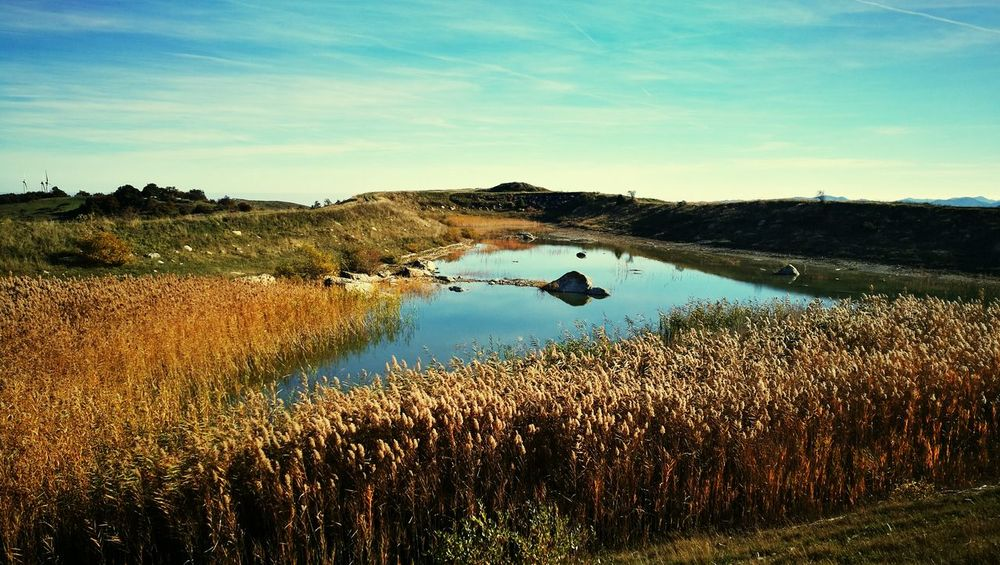 Nature Water Outdoors Landscape Wetland Sky Nature Water Reflection Blue Landscape Wetland Outdoors Lake Social Issues No People Scenics Reed - Grass Family Grass Day Tree Beauty In Nature Agriculture First Eyeem Photo