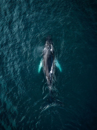The Great Outdoors - 2018 EyeEm Awards Animal Animal Themes Animal Wildlife Animals In The Wild Aquatic Mammal Beauty In Nature Day Mammal Marine Motion Nature No People One Animal Outdoors Sea Sea Life Swimming UnderSea Underwater Water