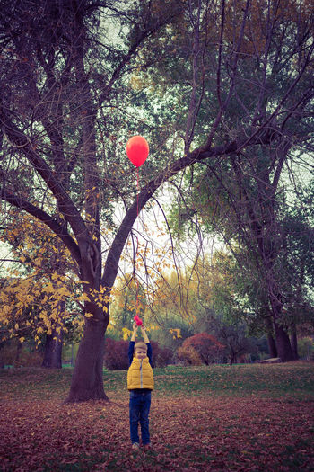 Balloon One Person Nature Casual Clothing Outdoors Boys Kid Childhood Child Children Only Playing Playful Helium Balloon Red Red Balloon Innocence Park - Man Made Space Autumn People Caucasian Blond Hair Carefree Cute Standing Full Length Park Real People Day Change Branch Tree Holding