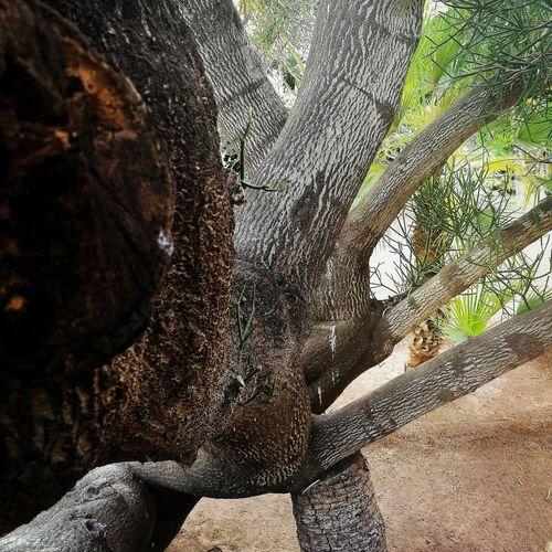 Marrakech Majorelle Tree