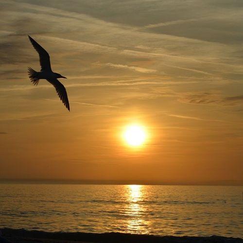 Sunset Nikon Florida Nature