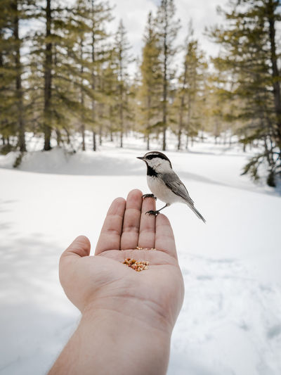 Bird perching on hand