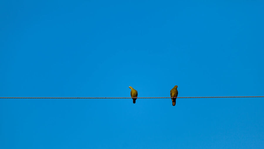 Several birds stand in a blue background.