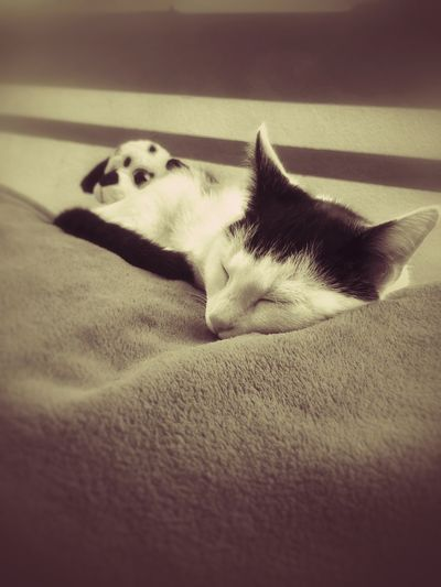 Domestic Animals Animal Themes Pets Relaxation One Animal Lying Down Indoors  No People Close-up Black And White Mobile Photography BrianArlt Mobilephotography Love❤ B&W Portrait