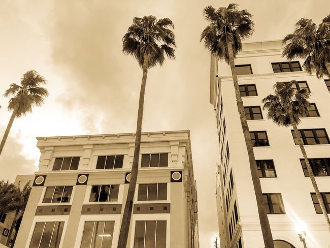 Vintage look City Place Sepia Buildings Palm Tree Low Angle View Sky Architecture Outdoors