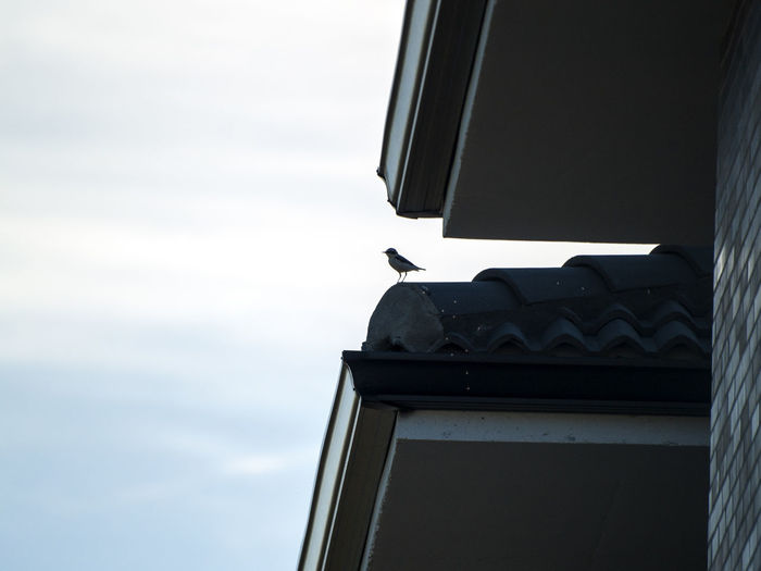 Animal Themes Animals Animals In The Wild Architecture Bird Birds Building Exterior Built Structure Cityscape Day Low Angle View No People Northern Wheatear Oenanthe Oenanthe Oenanthe One Animal Outdoors Perching Roof Silhouette Sky Urban Animals Urban Birds The Architect - 2017 EyeEm Awards