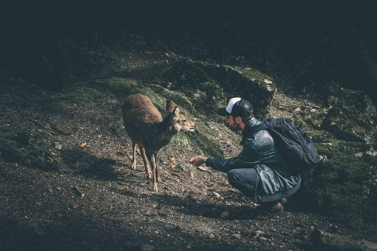 Man building trust with a wild animal in Switzerland Animal Animal Love Animals In The Wild Best Friend Best Moment Connected With Nature Connection Deer Faith Fearless Human And Nature Men Moment Moments Nature No Fear Outdoors Patience Swiss Switzerland Together Trust Wild Wildlife You And Me