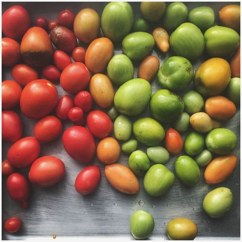 Food And Drink Food Healthy Eating Freshness Fruit Abundance Large Group Of Objects Indoors  No People Green Color Day Close-up Crops In The Sun Crops From Veggie Patch Tomato Tomatoes Kris Demey Photography Beauty In Nature Plant Nature Food And Drink Colour Of Life