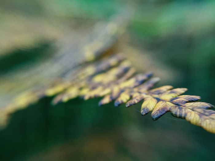Close-up of fern in autumn