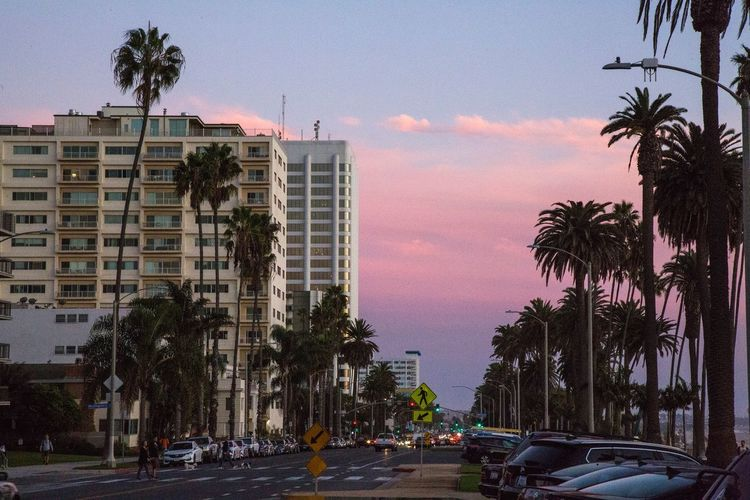 Palm trees in city against sky at sunset