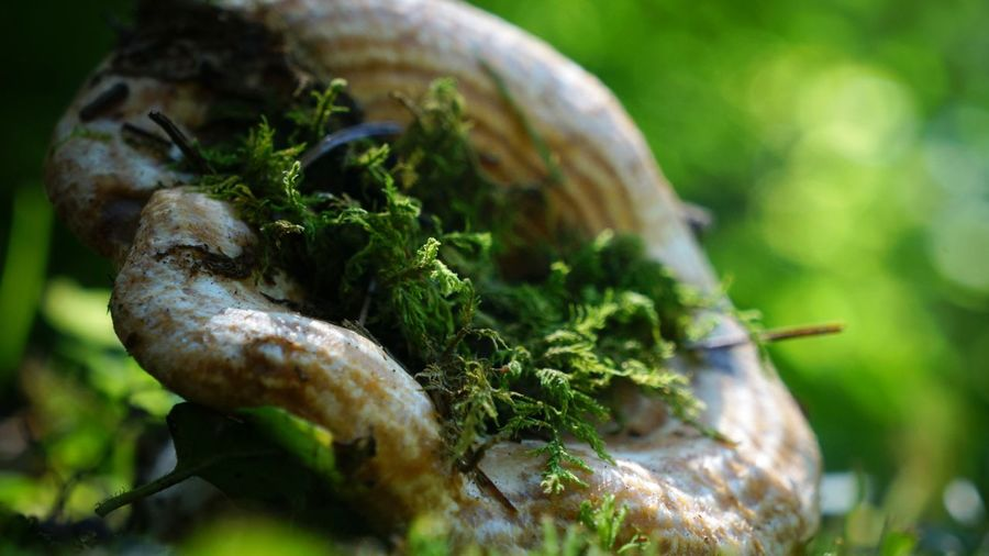 Beauty In Nature Bokeh Bokeh Photography Cap Close-up Day Focus On Foreground Forest Floor Green Green Color Growth Moss Moss-covered Mossporn Mushroom Nature Nature Photography No People Outdoors Plant Selective Focus
