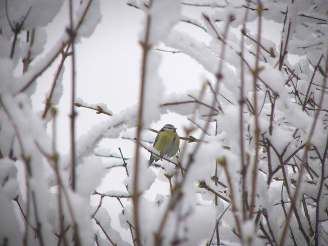 Bird Finland Winter Snow