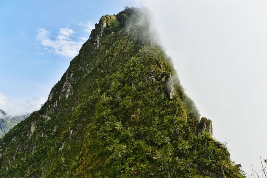 Sky Mountain Sky Mountain Tree Nature Low Angle View Growth Beauty In Nature Green Color Scenics Moss Fog Tranquility Outdoors Non-urban Scene Overgrown Day Cloud - Sky Tranquil Scene Steep Majestic MachuPicchu Machu Picchu Mountain Range