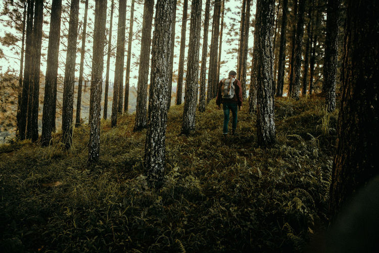 Into the Woods Adventure Forest Into The Wild Into The Woods Land Landscape Nature One Man Only Only Men Outdoor Photography Outdoors Outdoors❤ Pine Tree Plant Scenics Tree Tree Trunk WoodLand Sommergefühle