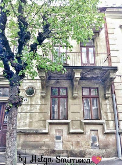Tree Nature Spring Lviv House Shopen Ukraine
