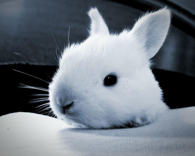 Bunny 🐰 Awakening Face Baby Bunny