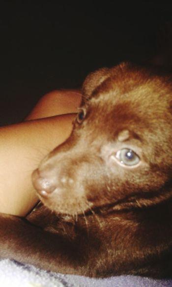 My Little Puppie ♡ Amo Mais Q Chocolate ❤ Milka💕 Menina Linda ♡ Dog❤ Dog Lovers