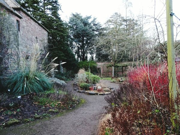 Walled garden secluded Wirral No People Outdoors Nature Sky Tranquility Trees Autumn Beauty In Nature Plant Green Color Growth