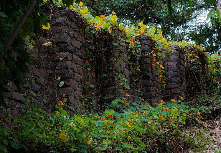 A Secret Garden Brick Brickwall Countryside Flower Flowers Path Peaceful Tranquility Walk Wall