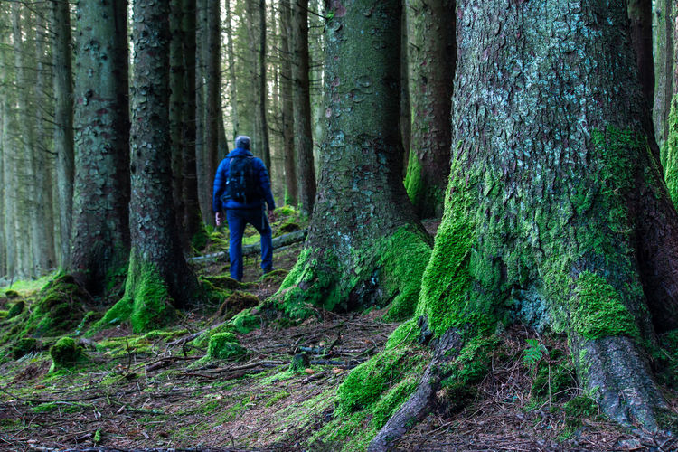Full length rear view of man walking in forest