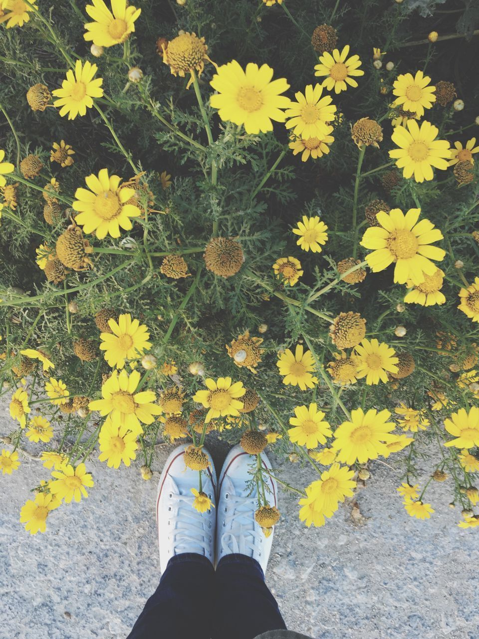 low section, flower, person, yellow, personal perspective, shoe, high angle view, standing, leaf, fragility, human foot, petal, unrecognizable person, freshness, plant, nature, part of