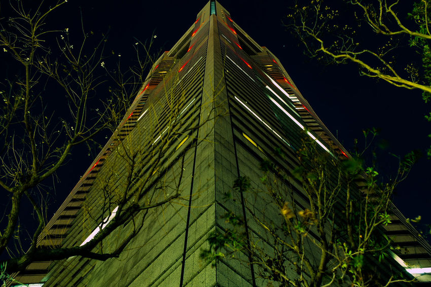 横浜 Yokohama Low Angle View Green Color Growth Architecture No People Night Built Structure Sky