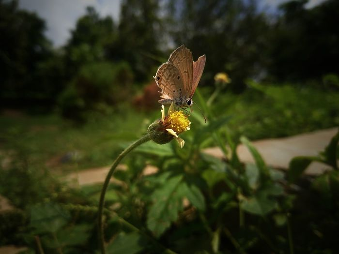 Insect Butterfly - Insect Day Outdoors Close-up No People Nature Beauty In Nature Freshness Plant Mobilephotography Happiness ♡ Clickbyme Vivov5plus Mix Yourself A Good Time Photowalk Enjoyment The Week On EyeEm Pet Portraits EyeEmNewHere