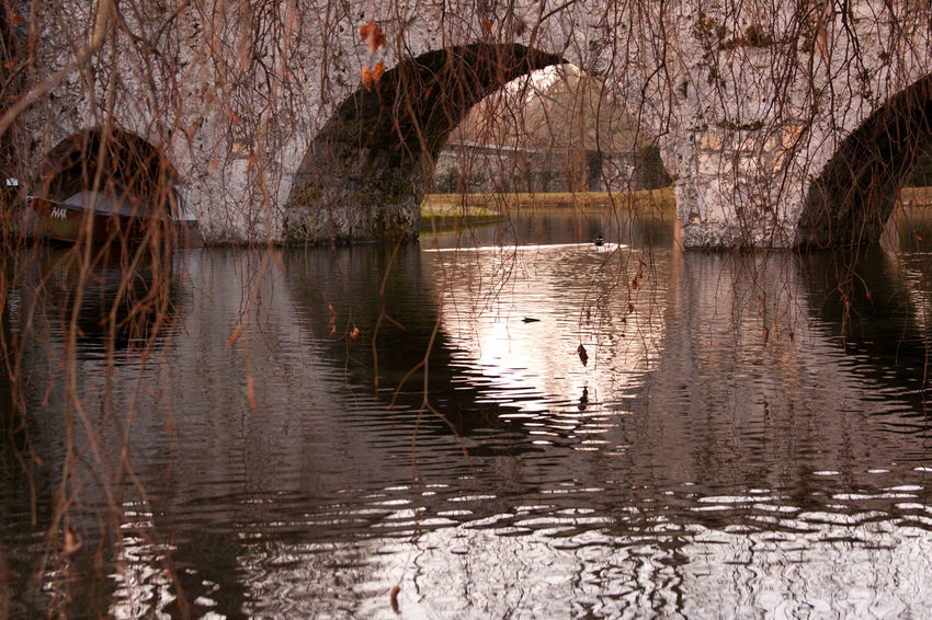 Beauty In Nature Bird Bridge Day Lake Nature No People Outdoors Tree Water