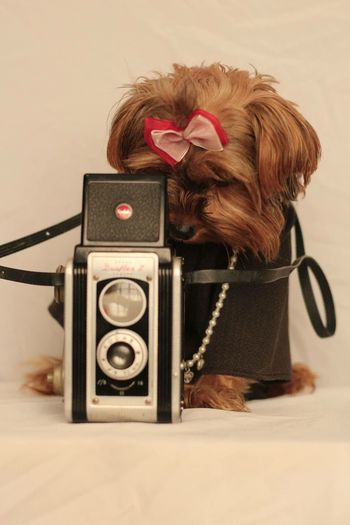 Smile! Retro Styled Old-fashioned Camera - Photographic Equipment Pets Domestic Animals Dog Photography Themes No People Indoors  Animal Themes Mammal Technology Close-up Day