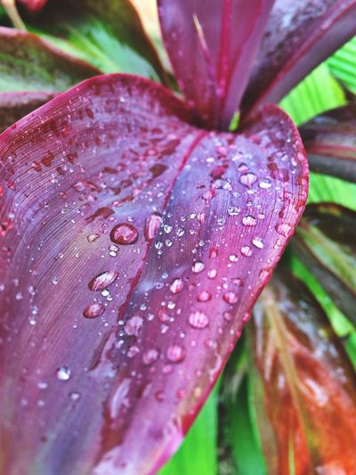 The Illuminator - 2014 EyeEm Awards Hawaii Water Droplets Leaves