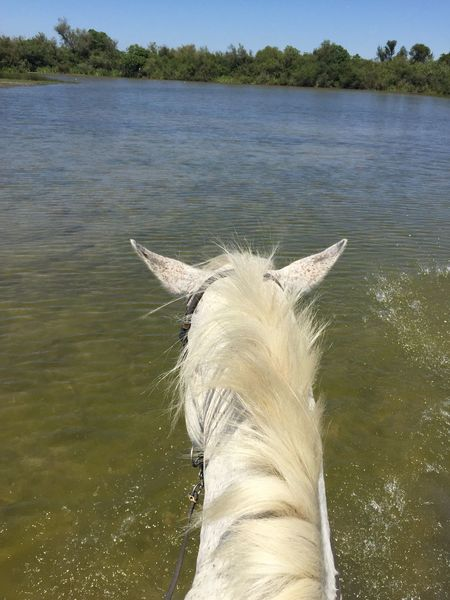 Pet Portraits Water Sea Underwater One Animal Animal Wildlife Swimming Animals In The Wild France 🇫🇷 Cheval Cheval Blanc Horse Horses