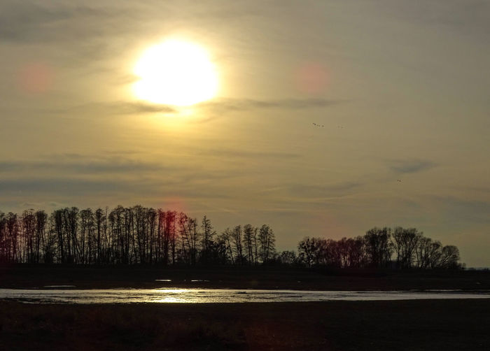 Early Spring At Oder River Beauty In Nature Nature Scenics Sky Sun Sunlight Sunset Tranquil Scene Tranquility Tree