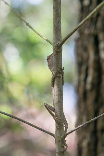 Branches Lizard Symmetry In Nature Animal Themes Animals In The Wild Branch Close-up Comouflage Day Focus On Foreground Hiding Nature No People Outdoors Tree