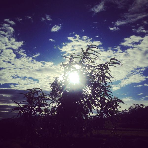 Sunlight Beauty In Nature Bright Cloud - Sky Day Growth Lens Flare Low Angle View Nature No People Outdoors Plant Scenics - Nature Silhouette Sky Solar Flare Streaming Sun Sunbeam Sunlight Sunset Tranquil Scene Tranquility Tree
